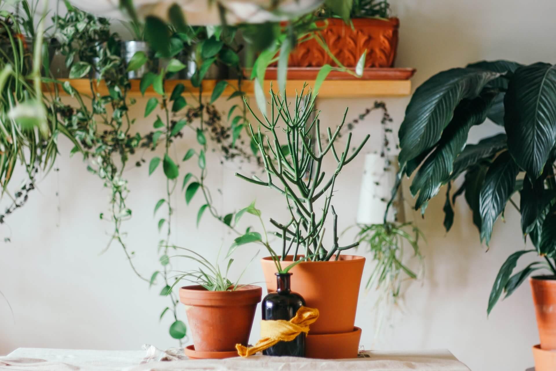 安らぎを感じさせる植物
