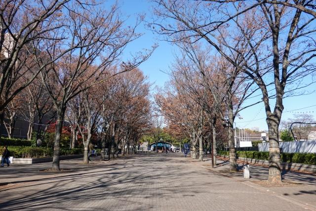【第4位】ゆったりできる公園「代々木公園(よよぎこうえん)」