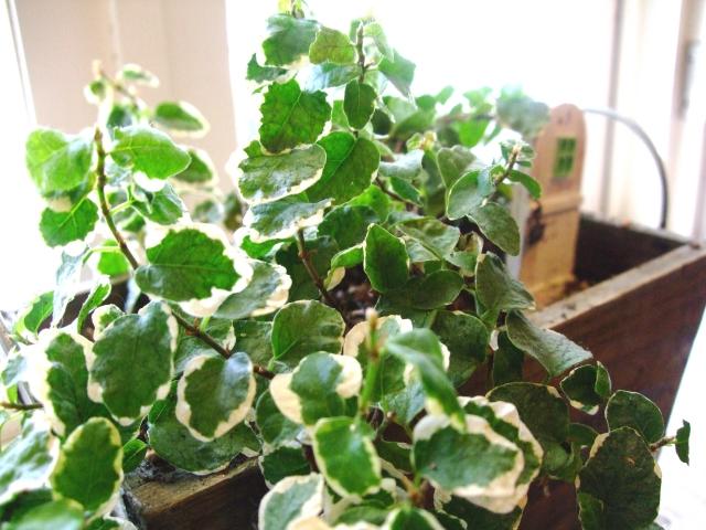 観葉植物はお仕事のパートナー