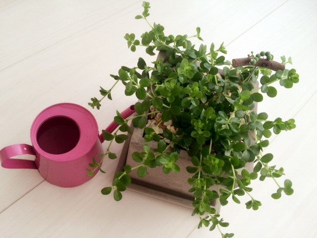 観葉植物を設置するときのポイント②メンテナンス