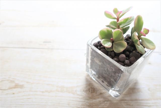 観葉植物が人に良い影響を与える根拠④気分を落ち着かせる効果