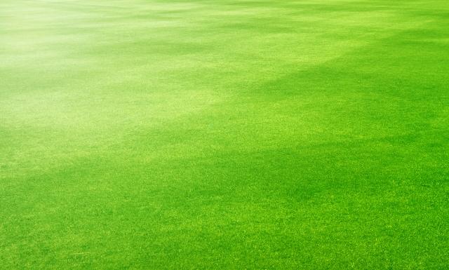 ブランド力がなくてもオフィスをユニークに①:オフィスの床に人工芝を使用