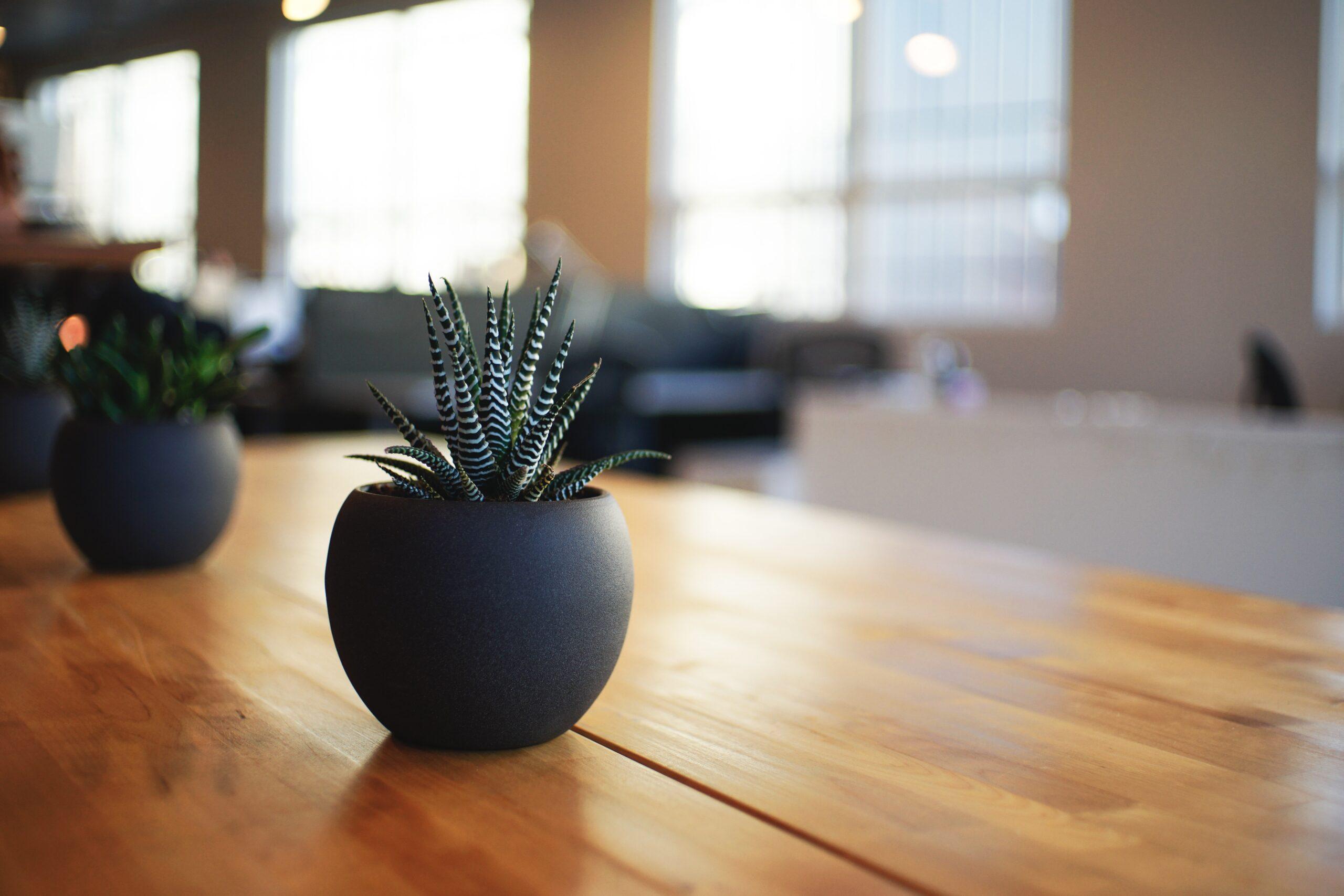 まとめ:オフィスに緑視率を上手に取り入れて業務効率UPを図ろう
